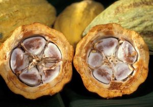 cacao-pod-with-cocao-beans